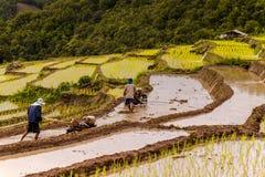 Reislandwirte auf Reisfeld auf terassenförmig angelegtem in Nord-Thailand, Mae-ja Lizenzfreie Stockfotos