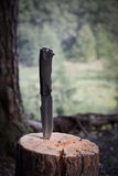 Reismes in het hout Royalty-vrije Stock Afbeeldingen