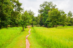 Reispaddy in der kambodschanischen Landschaft, Siem Reap, Kambodscha Stockfotos