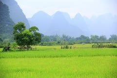 Reispaddy und -hügel Stockbild
