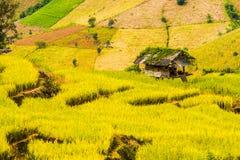 Reispaddys auf Hoch 16 Lizenzfreie Stockbilder