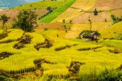 Reispaddys auf Hoch 17 Stockbild