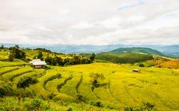 Reispaddys auf Hoch 8 Lizenzfreie Stockfotos