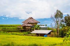 Reispaddys auf Hoch 19 Lizenzfreie Stockbilder