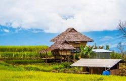Reispaddys auf Hoch 20 Stockfotografie
