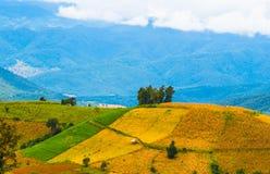 Reispaddys auf Hoch 18 Stockfoto