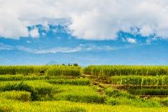 Reispaddys auf Hoch 21 Stockfotografie