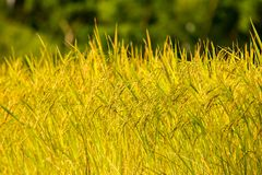Reispaddys auf Hoch 3 Lizenzfreies Stockbild