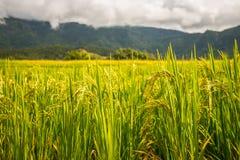 Reispaddys auf Hoch 32 Lizenzfreie Stockbilder