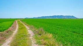 Reispaddys nahe Valencia Stockfotos