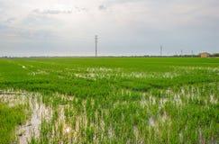 Reispaddys nahe Valencia Lizenzfreies Stockfoto