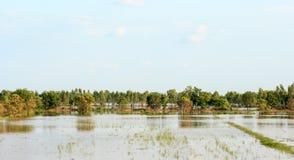 Reispaddys werden mit Wasser überschwemmt Lizenzfreie Stockfotos