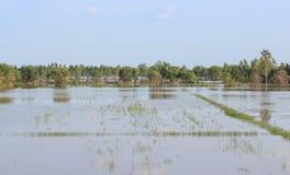 Reispaddys werden mit Wasser überschwemmt Lizenzfreie Stockfotografie