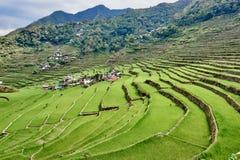 Reispaddyterrasse fängt Philippinen auf stockfotos
