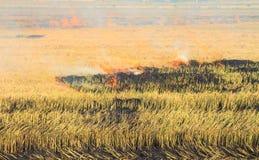 Reisstroh, das im Bauernhof für die Landwirtschaft brennt Lizenzfreies Stockbild