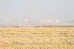 Reisstroh, das im Bauernhof für die Landwirtschaft brennt Stockfoto