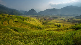 Reisterrasse auf dem moutain in Vietnam Stockfoto