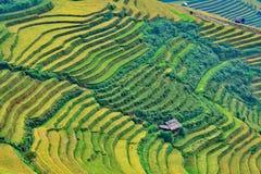 Reisterrasse bei Vietnam lizenzfreie stockfotografie