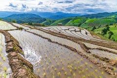 Reisterrasse in einer bewölkten Beleuchtung der Regenzeit Stockfoto