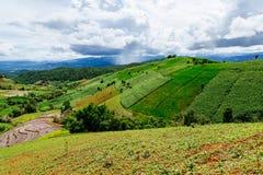 Reisterrasse in einer Landschaft mit Regen im Hintergrund Stockbild