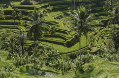 Reisterrasse mit Palmen Stockfotografie