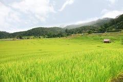 Reisterrasse Nationalpark Doi Inthanon am Chom-Zapfen-Bezirk Chiang Mai Province Stockfotos