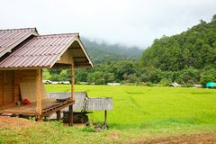 Reisterrasse Nationalpark Doi Inthanon am Chom-Zapfen-Bezirk Chiang Mai Province Stockfoto