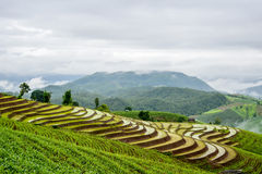 Reisterrasse und nebeliges Stockbild