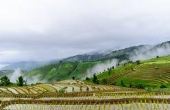 Reisterrasse und nebeliges Stockfotografie