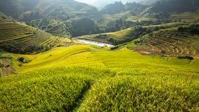 Reisterrasse in Vietnam Lizenzfreie Stockbilder