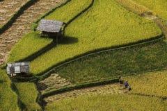 Reisterrasse in Vietnam Lizenzfreies Stockfoto