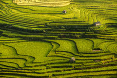 Reisterrasse in Vietnam Stockfotos