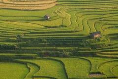 Reisterrasse in Vietnam Stockbild