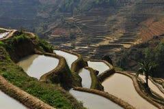 Reisterrasse voll des Wassers Lizenzfreie Stockbilder