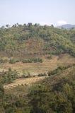 Reisterrasse von Nordthailand Lizenzfreies Stockbild