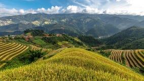 Reisterrassen auf dem Berg Stockbild