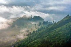 Reisterrassen im Nebel des frühen Morgens im Kathmandutal, Nepal Stockfotografie