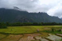 Reisterrassen in Laos lizenzfreies stockbild