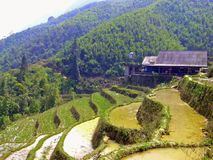 Reisterrassen in Nord-Vietnam Stockbilder