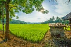 Reisterrassen in Thailand Lizenzfreie Stockfotos