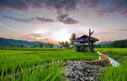 Reisterrassen in Thailand Lizenzfreie Stockbilder