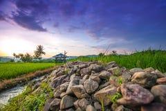 Reisterrassen in Thailand Lizenzfreies Stockbild