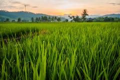 Reisterrassen in Thailand Stockbild