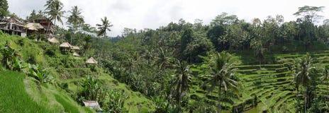 Reisterrassen in Ubud, Bali Lizenzfreies Stockfoto