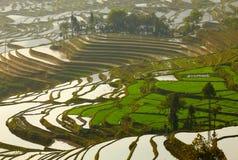 Reisterrassen. Yunnan, China. Lizenzfreies Stockbild