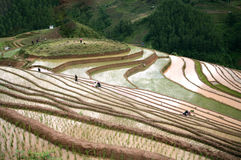 Reisterrassenfeld bei dem drei Haus-Dorf, Nordwest, Vietnam Stockbild