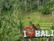 Reisterrassenfelder in Bali lizenzfreie stockfotos