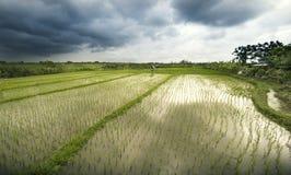 Reisterrassenlandschaft Lizenzfreies Stockbild