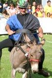 Reiten eines Eselwettbewerbs Lizenzfreies Stockbild