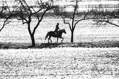 Reiten eines Pferdeschwarzen/-WEISS Lizenzfreies Stockfoto